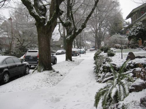 NE Flanders in Laurelhurst in Snow