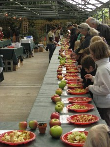 Over Thirty Types of Apples