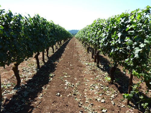 Dundee Hills Oregon's Key Wine Country