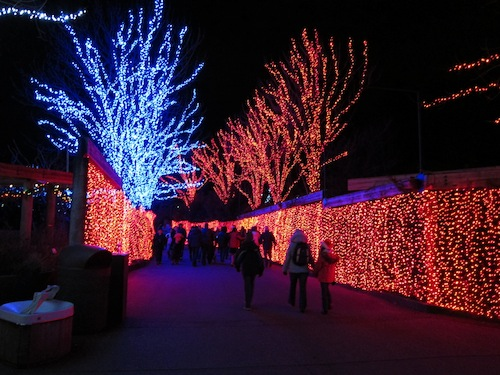 Exceptionally Beautiful Lights at Zoo Lights